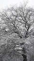 snow26_edited-142x250