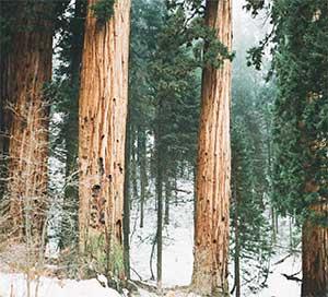 Eastern Element Wood