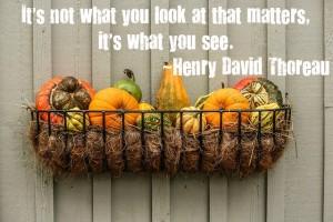 gourds-pumpkins-squash-autumn-vignette
